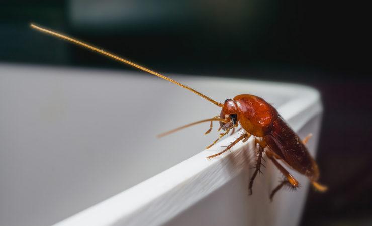 Schädlingen den Kampf ansagen: So funktioniert's!