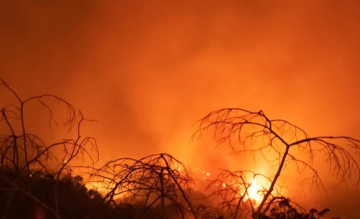 Pantanal in Brasilien wird von schlimmen Waldbränden heimgesucht