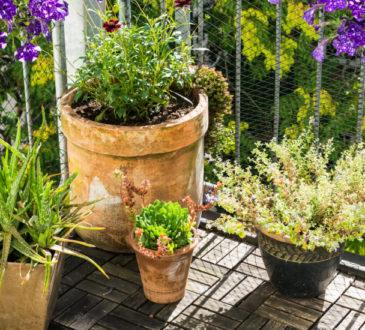 Welche Pflanzen sind für welche Balkone geeignet?
