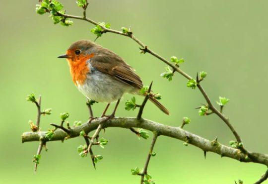 Vergnügtes Gezwitscher - Wie locken Sie Vögel in den eigenen Garten