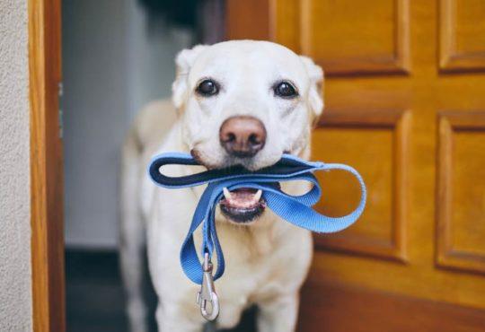 Zubehör für den Hund