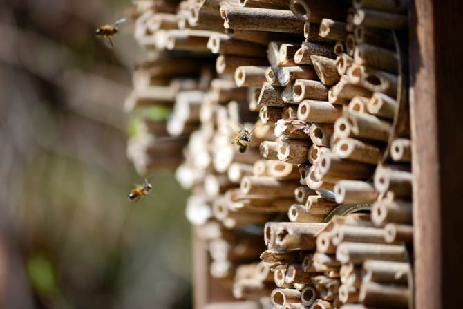 Insektenhotel - Insektenfreundlicher Garten