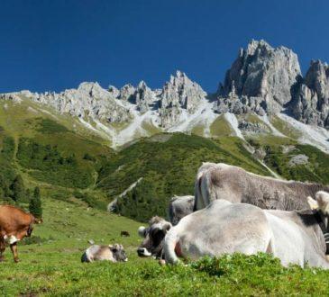 Kalkalpen - Täler im Alpengebirge von Österreich