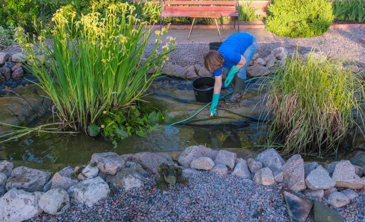 Tipps zur Teichpflege