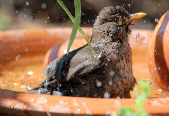 Vogelbad und Vogeltränke - Tipps für Tierfreunde