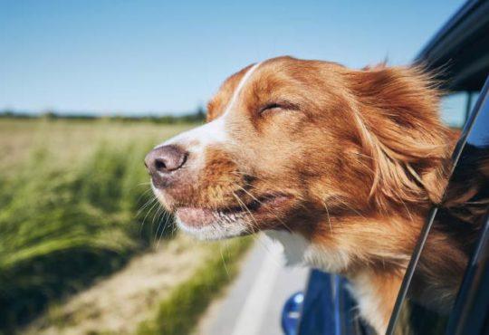 Urlaub mit Hund - Worauf achten?