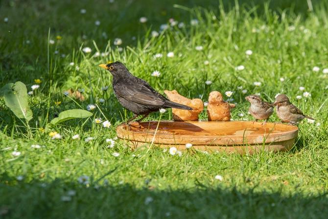 Eine gut geeignete Position für eine Vogeltränke ist eine freie Fläche