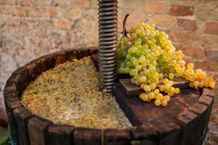 Weinpresse mit Maische