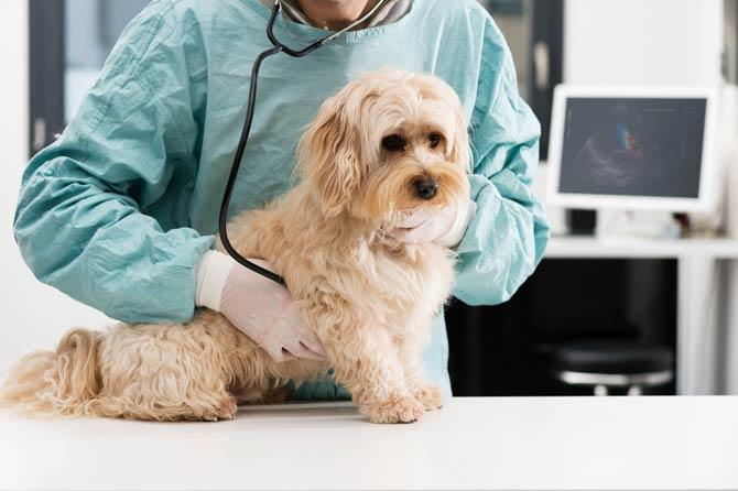 Leistungen Tierkrankenversicherung