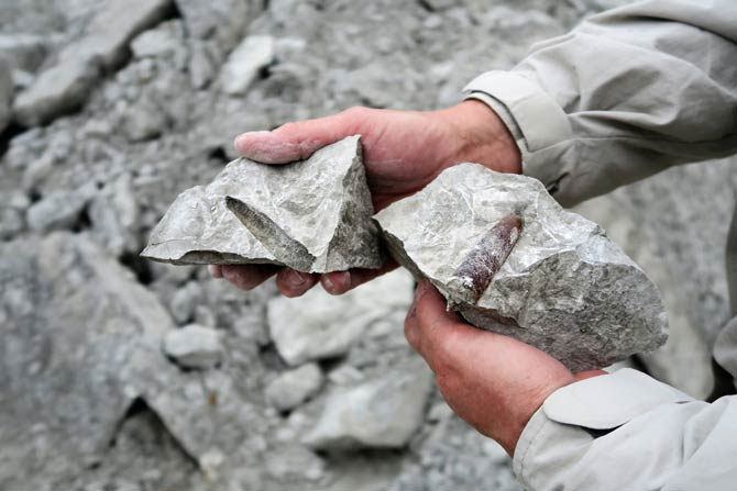 Fossilien in Kalksteinen