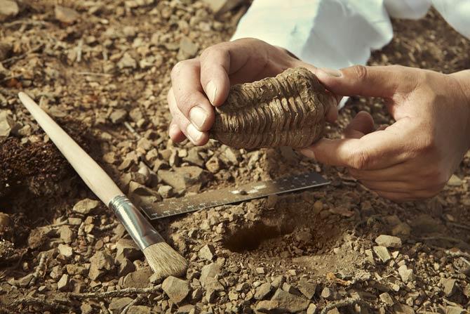 Fossiliensammler - geleitete Ausflüge