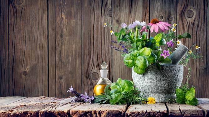 Definition von Heilpflanzen