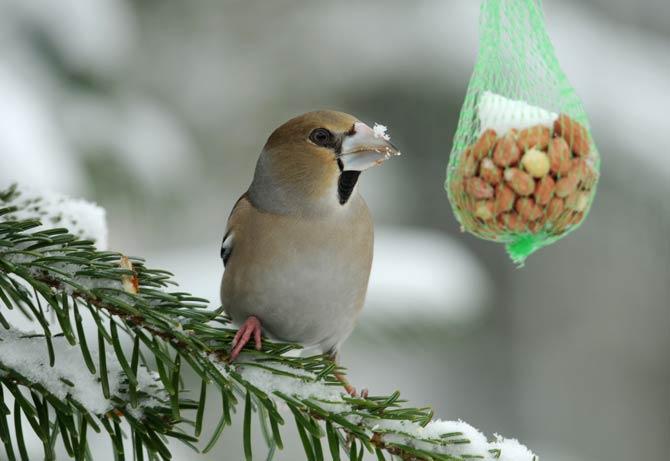 Futterstelle - Winterfütterung