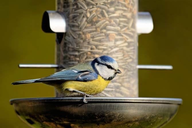 Vogel vor Futterstation