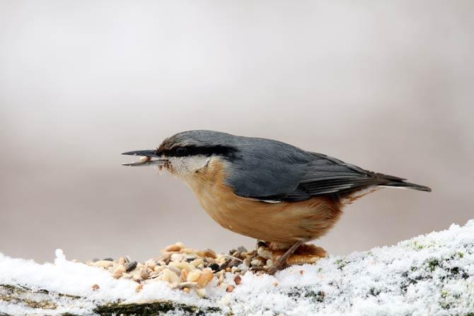 Winterfütterung - ein wichtiger Beitrag zum Vogelschutz