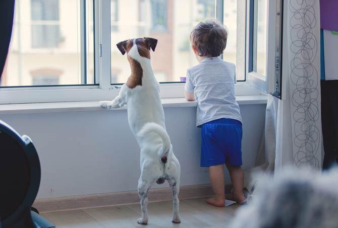 Hund als Familienhund