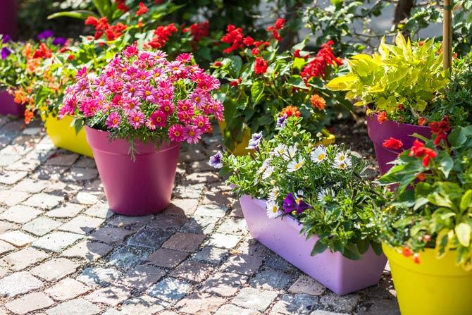 Balkonpflanzen in Töpfen