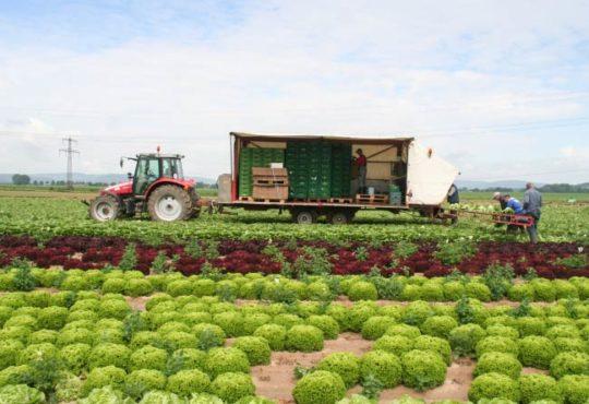 Erntehelfer für Obst- und Gemüseanbau