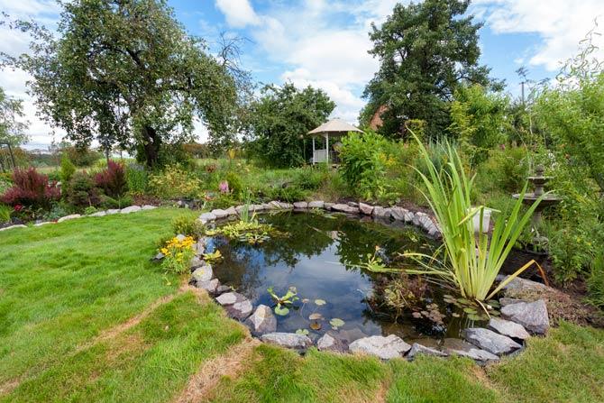 Voraussetzungen für die Haltung von Fischen im Gartenteich