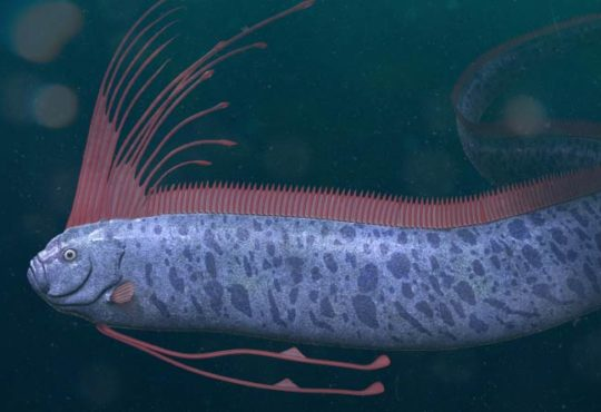 Die 10 außergewöhnlichsten Tiere des Meeres