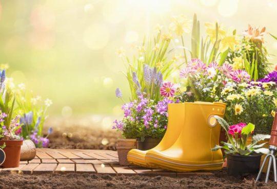 Gartenpflege im Sommer