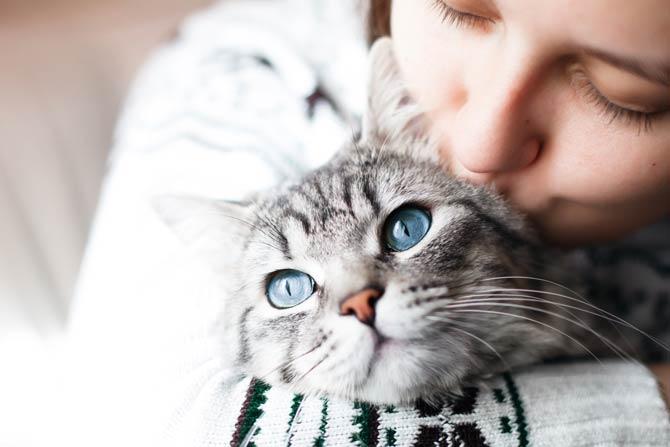 Katze beliebtestes Haustier
