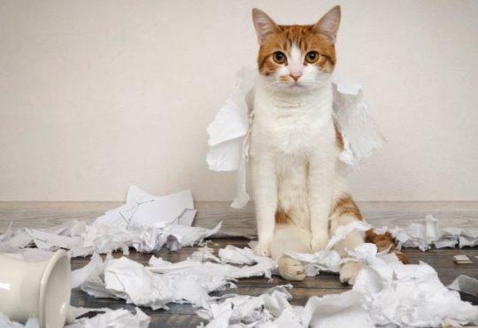 Tipps zur Katzenerziehung