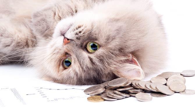 Was kostet eine Katze