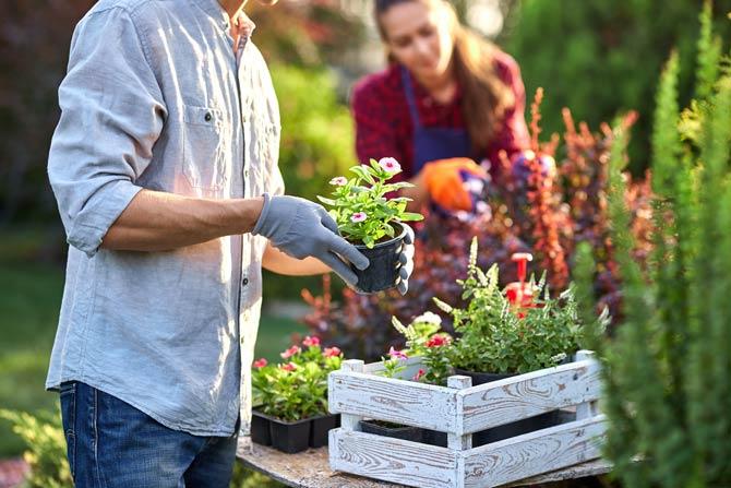 Gärtnern als beliebte Freizeitbeschäftigung