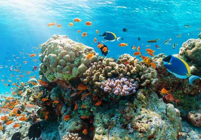 Korallenriff der Malediven