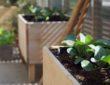 Welche Pflanzen eignen sich fürs Hochbeet?