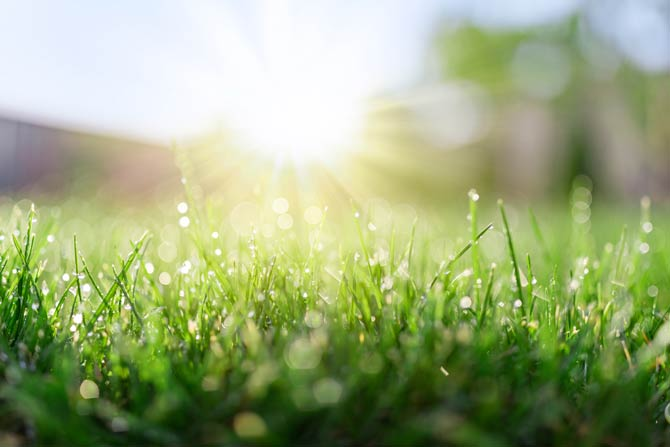 Hitze- und trockenheitsverträgliche Rasen
