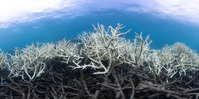 Korallenbleiche Great Barrier Reef