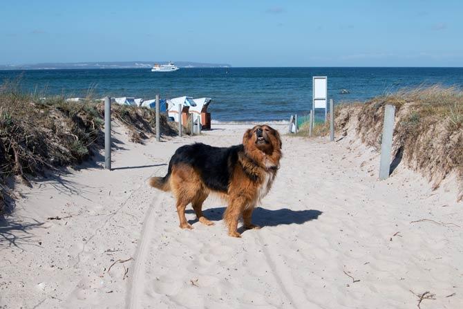 Rügen hundefreundlichste Insel
