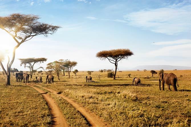Safari im Serengeti Nationalpark