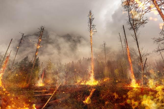 Naturkatastrophe Waldbrand